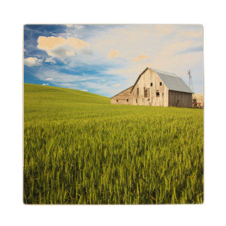 Old Barn Surrounded by Spring Wheat Field 2 Wood Coaster