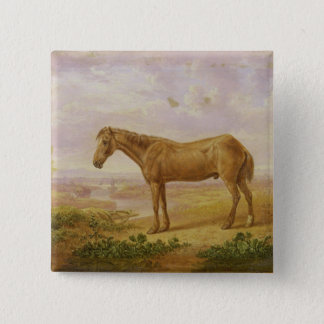 Old Billy, a Draught Horse, Aged 62 (oil on panel) 15 Cm Square Badge