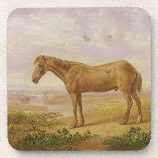 Old Billy, a Draught Horse, Aged 62 (oil on panel) Beverage Coasters