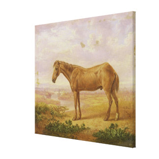 Old Billy, a Draught Horse, Aged 62 (oil on panel) Canvas Print