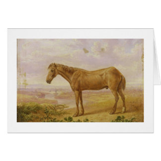 Old Billy, a Draught Horse, Aged 62 (oil on panel) Card
