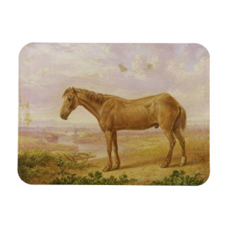 Old Billy, a Draught Horse, Aged 62 (oil on panel) Magnet