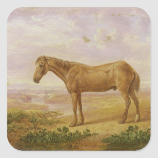 Old Billy, a Draught Horse, Aged 62 (oil on panel) Square Sticker