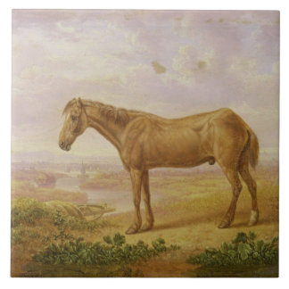 Old Billy, a Draught Horse, Aged 62 (oil on panel) Tile