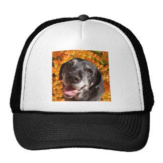 Old Black Labrador Cap