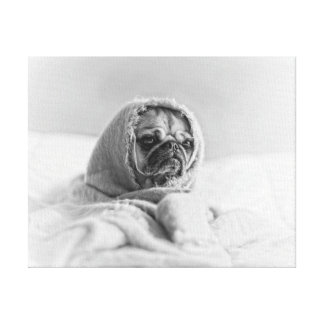 Old Country Pug Canvas Print