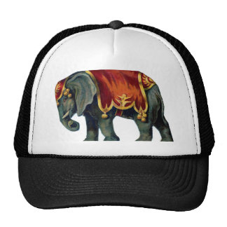 Old elephant of circus mesh hat