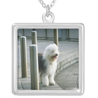 Old English Sheep Dog 2 Silver Plated Necklace