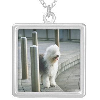 Old English Sheep Dog 2 Square Pendant Necklace