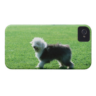 Old English Sheep Dog iPhone 4 Cover