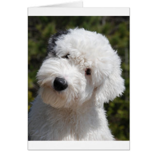 Old_English_Sheep_Dog pup.png Card