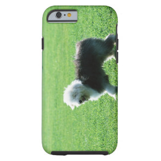 Old English Sheep Dog Tough iPhone 6 Case