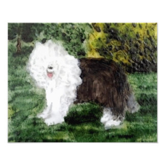 Old English Sheepdog Art Photo Print