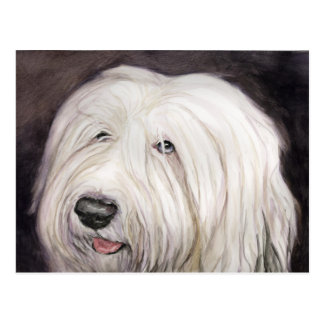 Old English Sheepdog Art Postcard