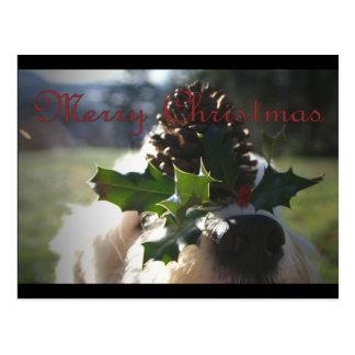 Old English Sheepdog Balancing Holly Postcard