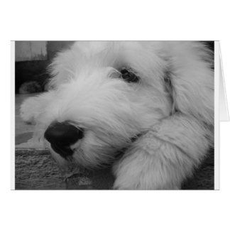 Old English Sheepdog Card