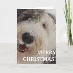 Old English Sheepdog Card - Merry Christmas