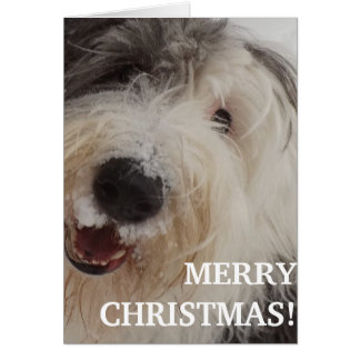 Old English Sheepdog Card - Merry Christmas