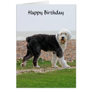 Old English Sheepdog dog birthday card, photo Greeting Card