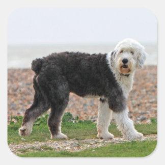 Old English Sheepdog dog stickers, gift Square Sticker