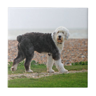 Old English Sheepdog dog tile or trivet, gift
