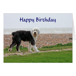 Old English Sheepdog happy birthday card