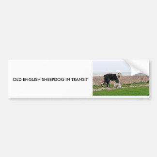 OLD ENGLISH SHEEPDOG IN TRANSIT sticker Bumper Sticker