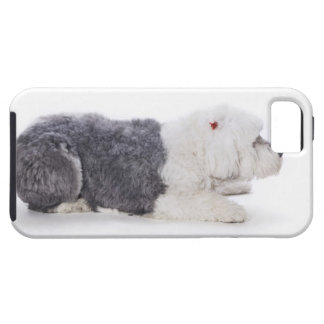 Old English Sheepdog on white background iPhone 5 Cases