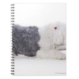 Old English Sheepdog on white background Notebook