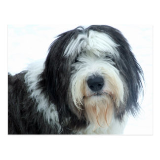 Old English Sheepdog Post Cards