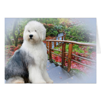Old English Sheepdog Spring Day Card