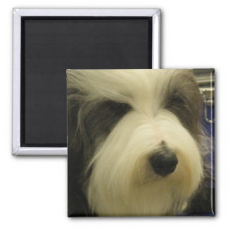 Old English Sheepdog Square Magnet