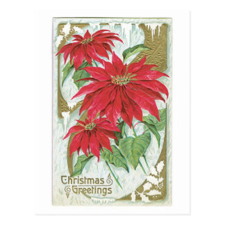 Old Fashioned Christmas Poinsettia Postcard