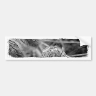 Old Fashioned Flowers Car Bumper Sticker
