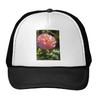 Old Fashioned Pink Rose flowers Trucker Hat