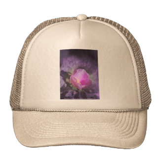 Old fashioned pink rose, purple texture mesh hats