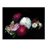 Old Fashioned Rose Flowers Floral Postcard