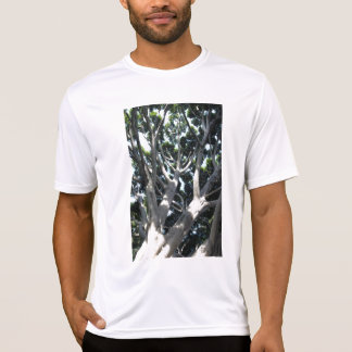 Old Fig Tree T Shirt