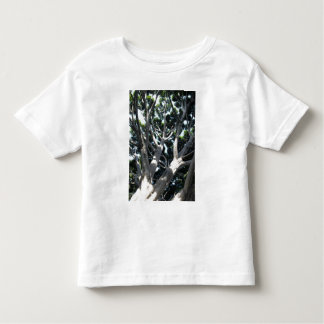 Old Fig Tree T Shirts