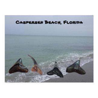 Old Fossilized Shark Teeth Florida Beach Treasures Postcard