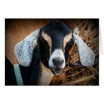 Old Goat Nubian Portrait Photo