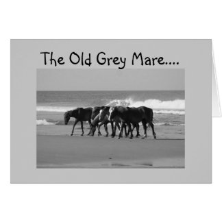 OLD GREY MARE JUST AIN'T SO YOUNG-GROUP GREETING CARD