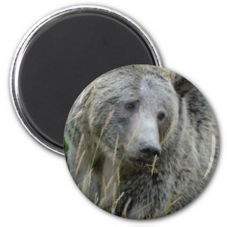 Old Grizzly Bear 6 Cm Round Magnet