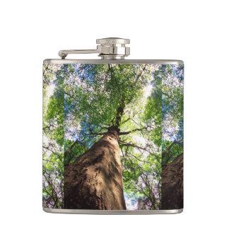 Old-Growth Beech Tree Flask