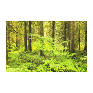 old growth forest at grove of the Patriarchs Canvas Print