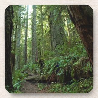 Old Growth Forest at Twanoh State Park, WA Beverage Coaster