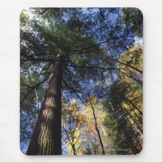 Old Growth Forest Mouse Mat
