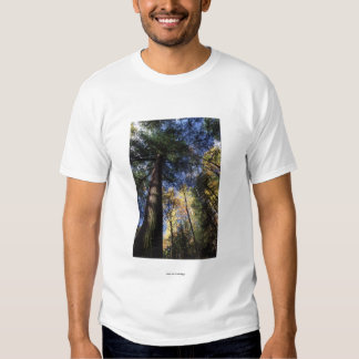 Old-growth Forest Tshirt