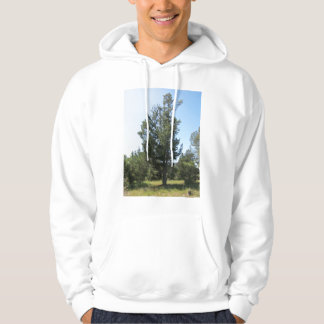 """""""Old Growth"""" Hoody"""