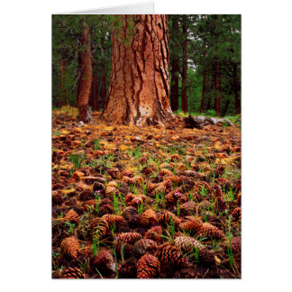 Old-growth Ponderosa tree with pine cones Card